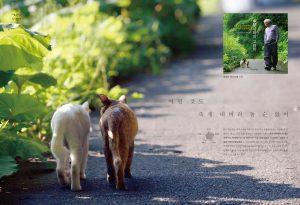 후쿠시마의고양이-책공장더불어