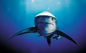 4_Inside-Chaeg_Sharks_March20__content-s