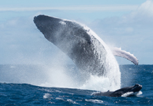 6_Inside-Chaeg_whale_March20__contents_small