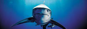 March20_Inside-Chaeg_Sharks_01