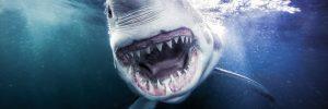 March20_Inside-Chaeg_Sharks_02